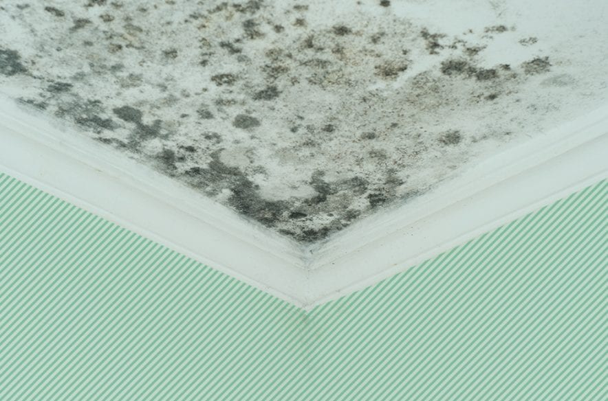 Photo illustration to accompany article on homeowners insurance and mold coverage
