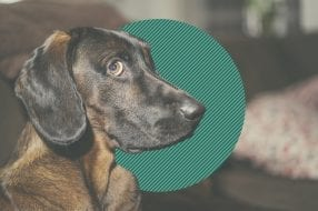 A photo to accompany a story about whether homeowners insurance covers dog bits