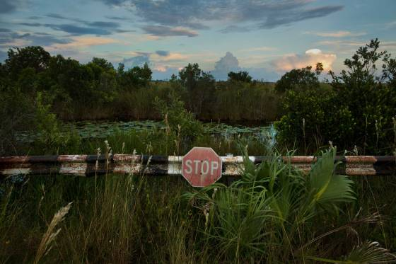 A stop sign on a back road in the Chekika area of Florida's Everglades National Park on Saturday Oct. 4, 2014. )