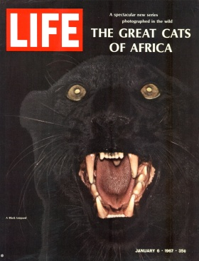Jan. 6, 1967 cover of LIFE magazine, Great Cats of Africa by John Dominis