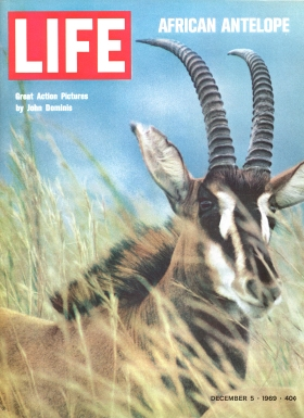 LIFE magazine 1969 cover with antelopes by John DOminis