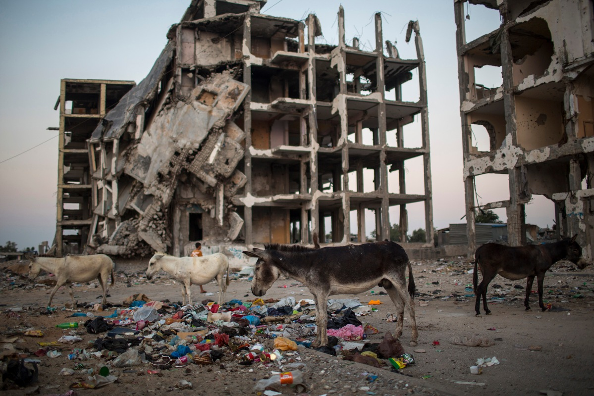 """<span class=""""credit"""">Donkey's are eating near destroyed buildings in the northern Gaza Strip on Strip, 31 July 2015. By Wissam Nassar.</span><span class=""""caption"""">Donkey's are eating near destroyed buildings in the northern Gaza Strip on Strip, 31 July 2015. By Wissam Nassar.</span>"""