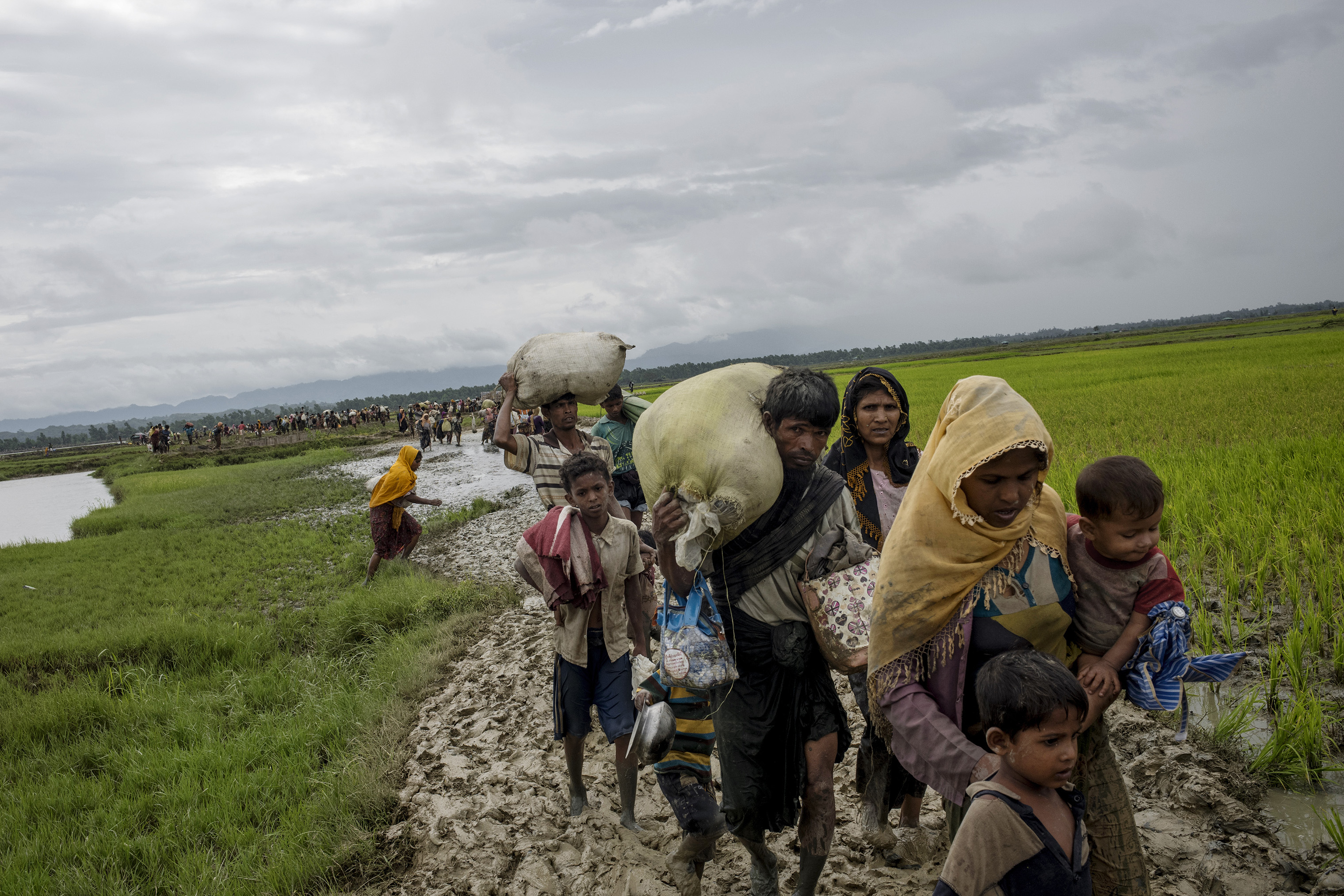Members of Myanmar's Rohingya ethnic minority walk through paddy fields and flooded land after crossing the border into Bangladesh, August 31, 2017.