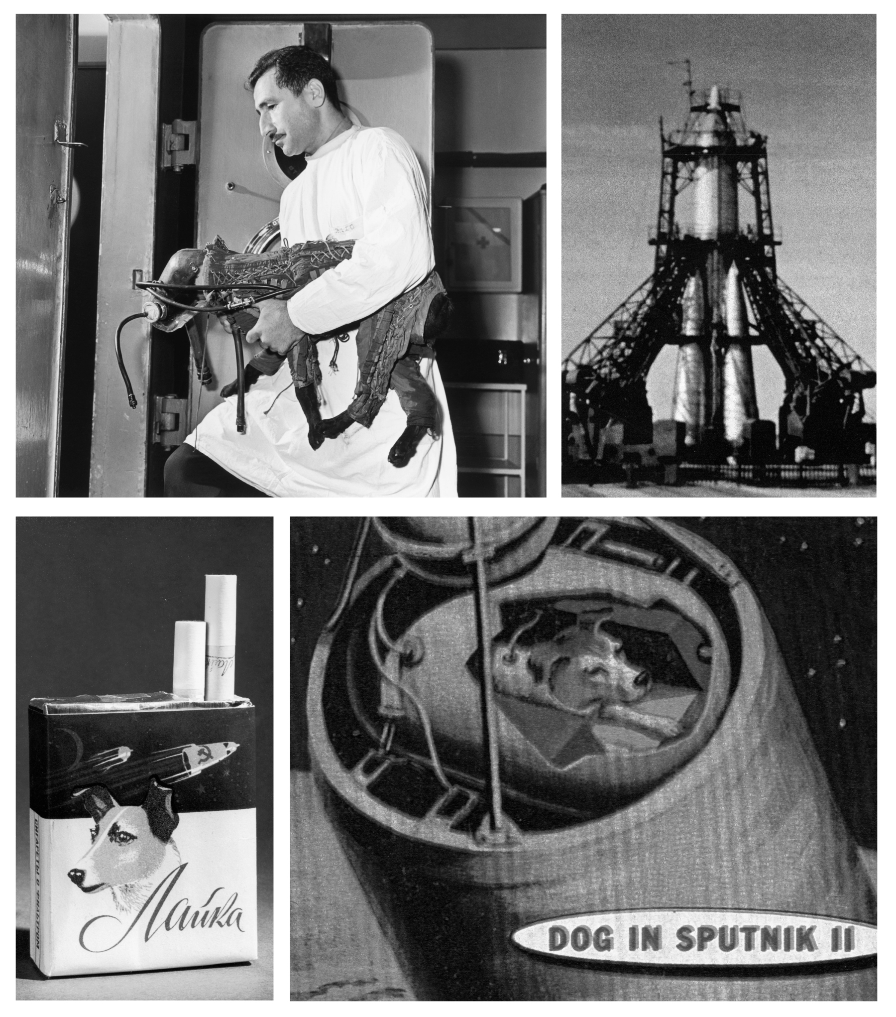 Meet The Heroic Animals That Went Into Space Before Humans